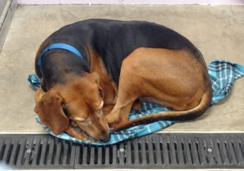 Our Goal: Kuranda Beds for Every Dog at our Shelter!