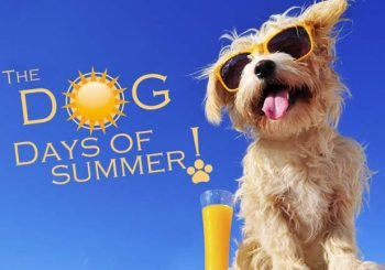 Stop by the Cone Shoppe for their Dog Days of Summer pup cup/cone photo contest!