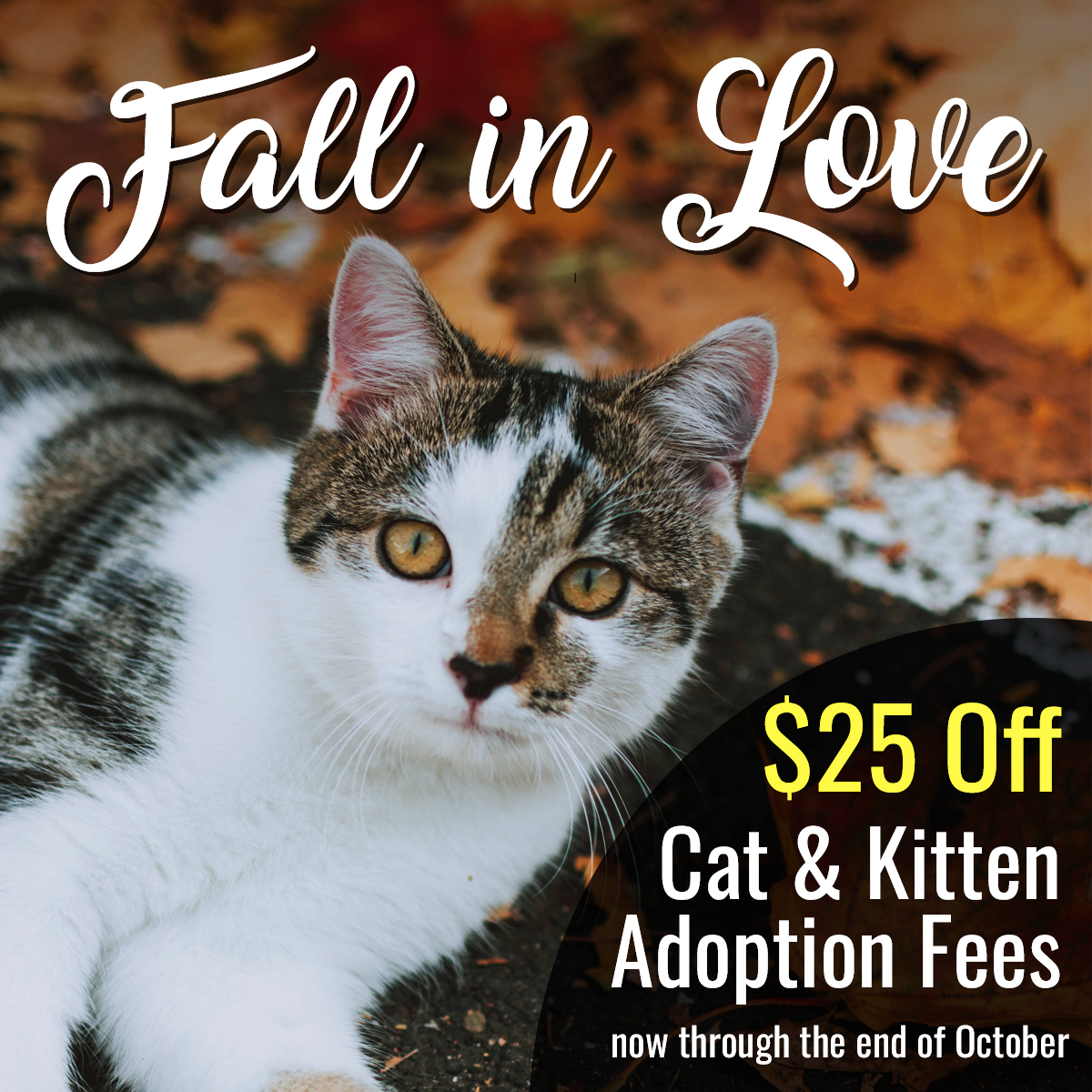 Fall in Love — Cat Adoption Special now thru the end of October